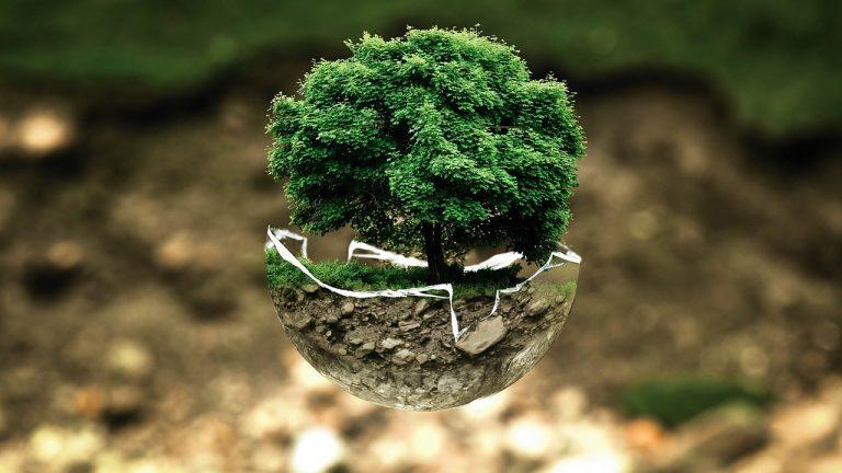 Les arbres : nos alliés pour la vie