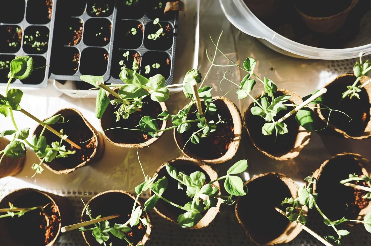 Plantes d'intérieurs : comment purifier son air au vert ?