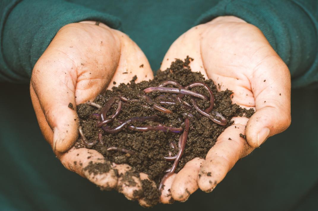 Le compost chez Trattino : anti-gaspi garanti !